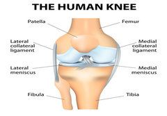 What happens before knee replacement surgery?