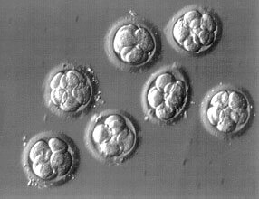 IVF Success in relation with the number of Embryos